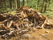 עצים להסקה בחינם