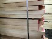 עץ בוק אירופאי